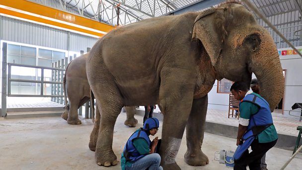 'Oldest known elephant in captivity' dies at 88 in India